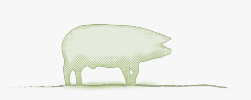 media/image/category_title_schwein.png