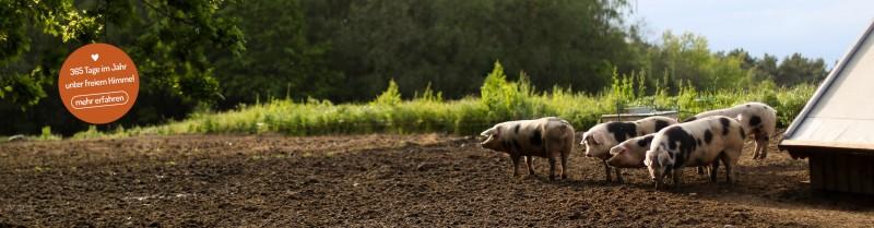 media/image/Schweine-Startseite-Button.jpg